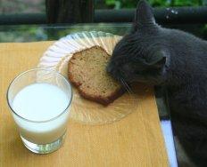 Правильное питание поддержит иммунитет кошки в норме