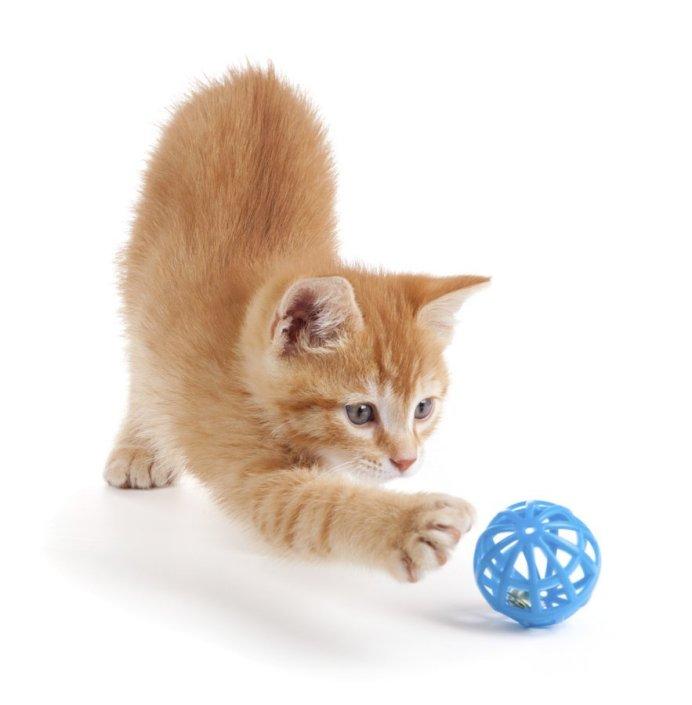 У кошки должно быть пространство для игр