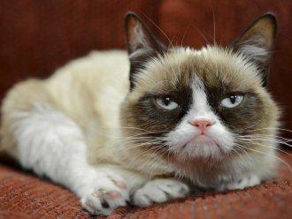 На начальной стадии болезни кошка вялая, отказывается от еды