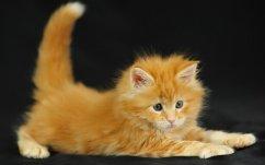 Кошка встречает вас, радостно подняв хвост