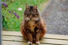 Своевременная обработка кошки от клещей уменьшит риск заражения при укусе