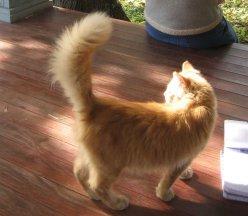 Если кошка сильно машет хвостом - будьте осторожны