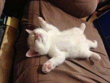 Во время дремоты кошка может подергивать лапой и усами