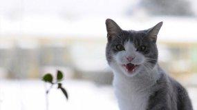Стрессы влияют на поведение животного