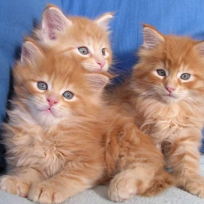 Витамины для котенка: как правильно подобрать?