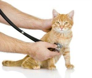 При первых признаках заболевания необходимо показаться ветеринару