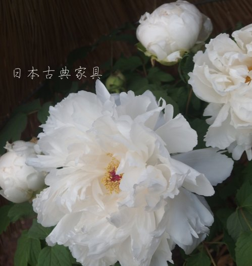 blogP1115462