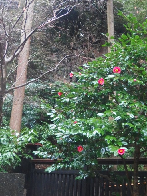 東慶寺 椿