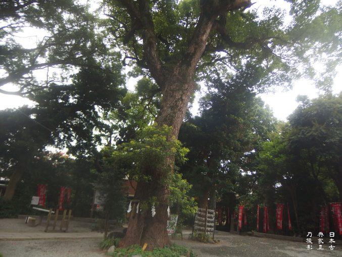 八雲神社(大町)境内