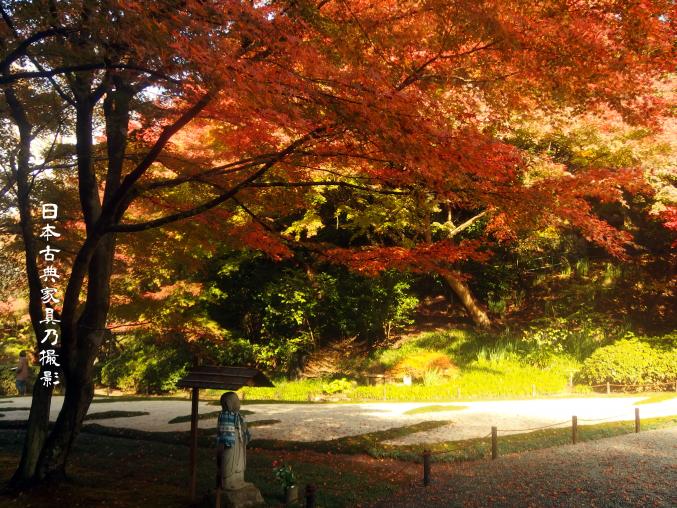 明月院の非公開庭園、本堂後庭園に紅葉を見に行ってきました。2016年 秘密の庭に!