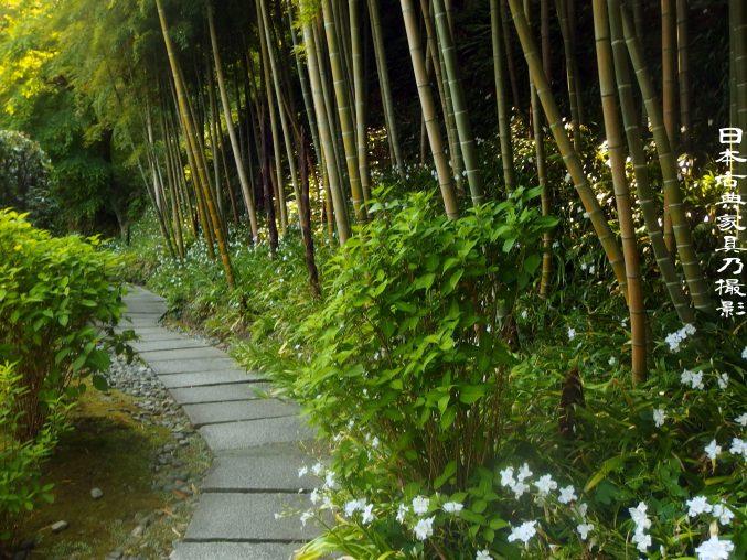 長寿寺 竹林 シャガの花