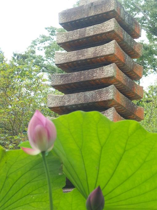 覚園寺 ハスの蕾