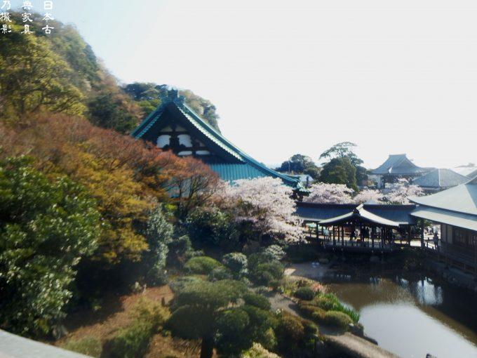 光明寺 観桜会