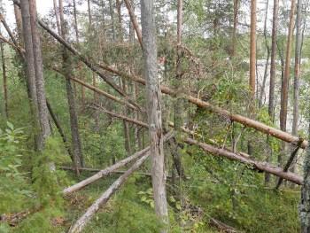 Luonnonsuojelualueella kaatuneita puita ei raivata.