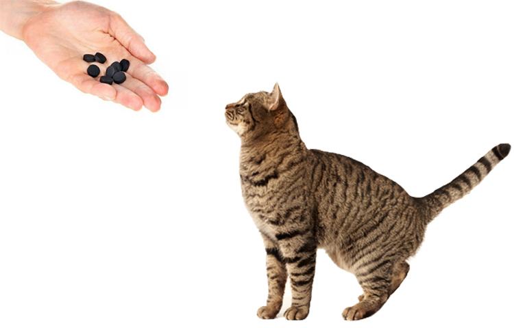 Можно ли давать кошке активированный уголь: дозировка. Как оказать помощь кошке при отравлении Как долго коту можно давать активированный уголь