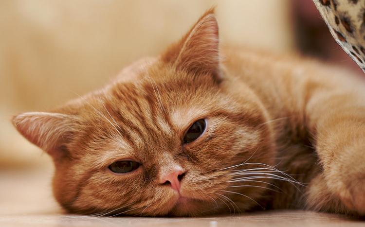 Низкий или повышенный гемоглобин у кошки причины и помощь
