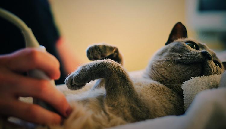 Пиелонефрит у кошек причины симптомы и лечение