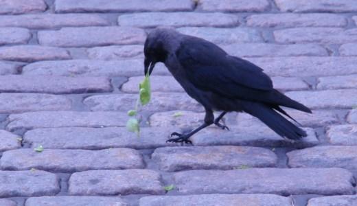 聖書にもワクワクを追い求めろと書いてある マナと空の鳥の話
