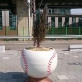 イスラエル国内の野球事情。野球チームはあるの?野球場はあるの?