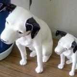 『表参道のセレブ犬とカバーニャ要塞の野良犬』キューバはどこかにあるユートピアなのか