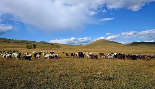 モンゴルの人との距離と家畜との関係を考えて、自分自身を振り返る