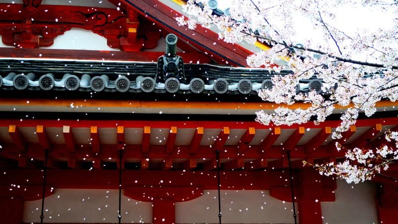 EP08 – Sakura e Startup japonesas mandam ver nos EUA | Kotobá Nihongo Podcast