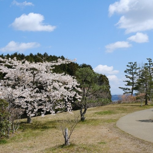 x-pro3で撮影の西行戻しの松公園の桜の写真