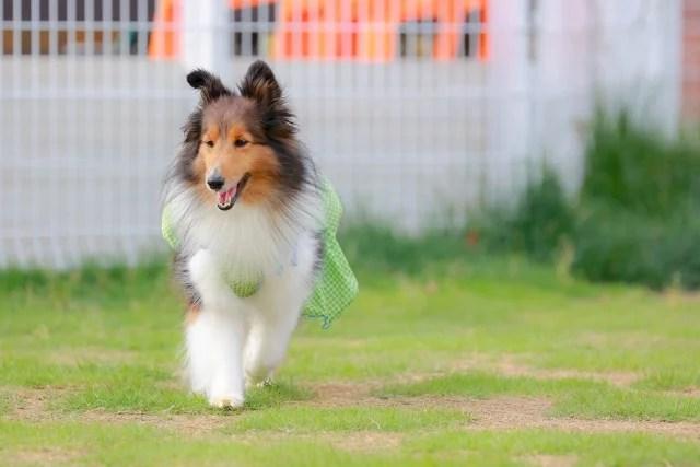 犬も食わないのイメージ写真