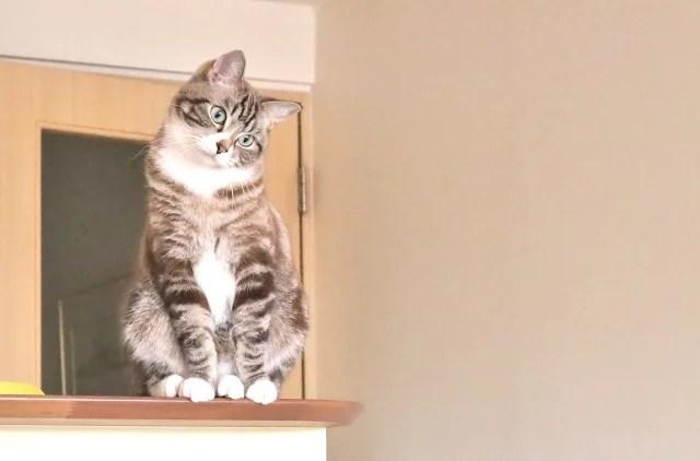猫を被るのイメージ写真