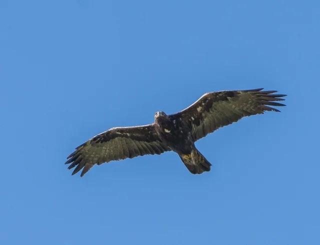 飛躍するイメージ写真