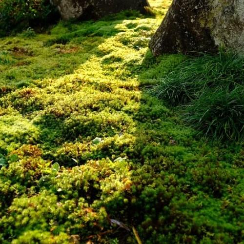 庭の9月の草花の写真
