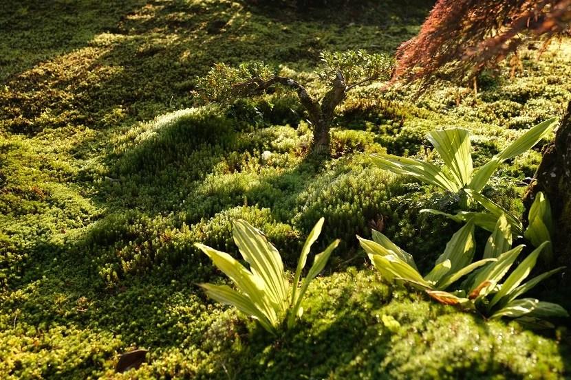 庭の九月の風景写真