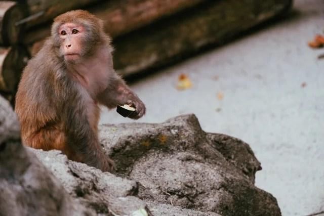 猿も木から落ちるのイメージ写真