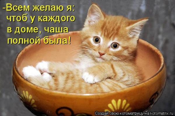 Фото приколы с кошками . Обсуждение на LiveInternet ...