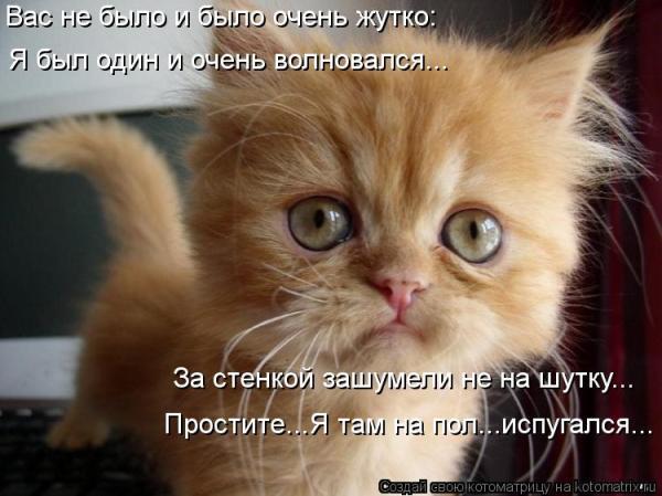 Котоматрица Лучшие за октябрь 2012