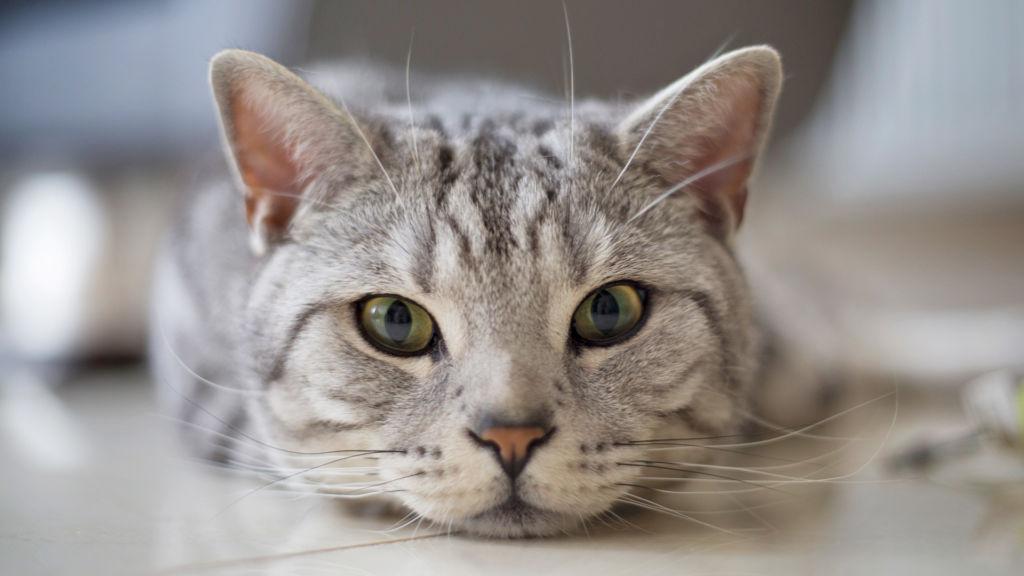 Как делать кошке массаж от запора назначение техника проведения