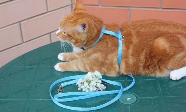 4 вида шлейки для кота: как правильно одевать, как выбрать