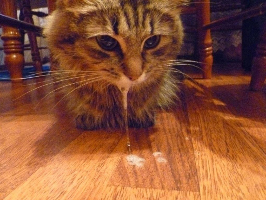 ما التطعيمات تفعل القطط ومتى  كيفية تحديد أن القط هو شرير