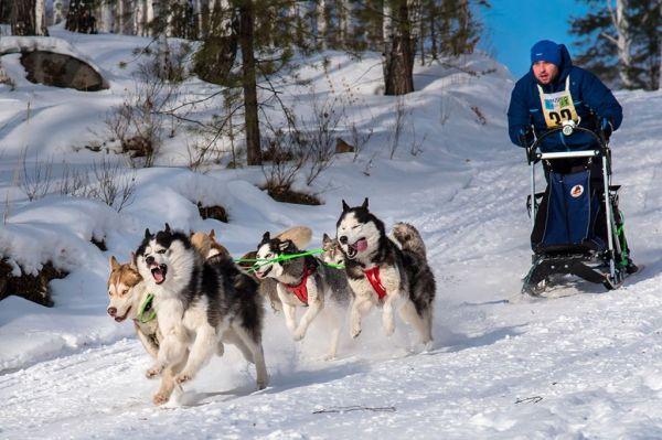 13 самых сильных пород собак в мире: фото, описание, плюсы ...