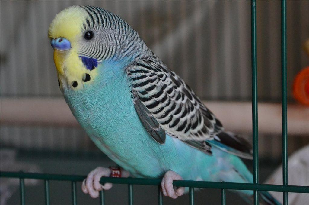 viziunea păsării iubitoare)