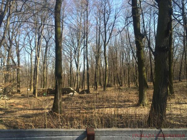 грабовий ліс