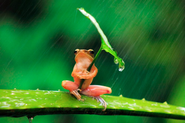 Image of: Frog With An Umbrella