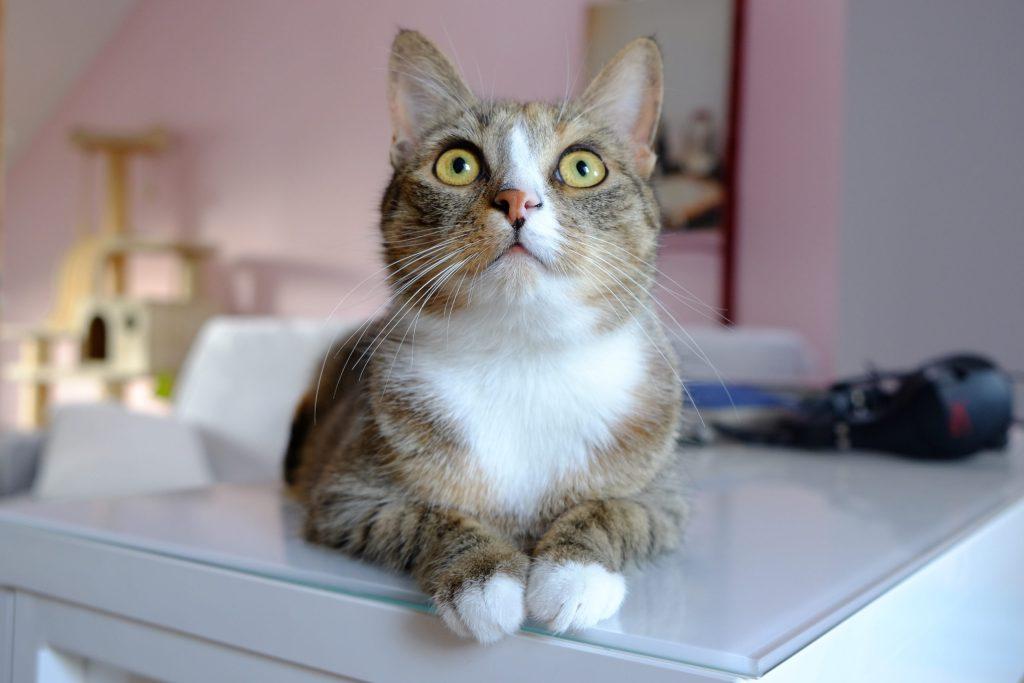kocia mama: 2. To Ty jesteś odpowiedzialna za kota i podejmujesz decyzje