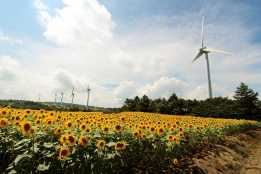 郡山布引風の高原 風力発電(風車)・ひまわりの画像
