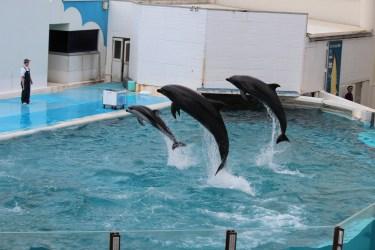 マリンピア日本海のイルカショー・新潟のオススメ水族館!