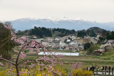 二本松市の桜名所2017、中島の地蔵桜