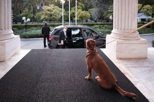 Το Μέγαρο Μαξίμου υιοθέτησε για πρώτη φορά αδέσποτο σκύλο