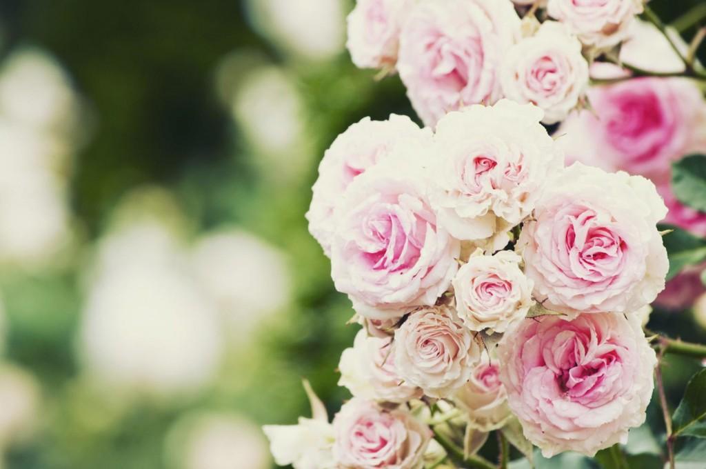 きれいな花にありがとう