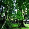 木へんに京でなんと読む