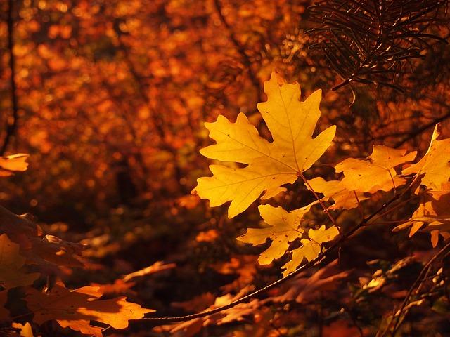 fall-200096_640